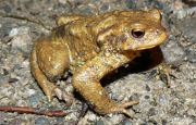 Galerie Amphibiens